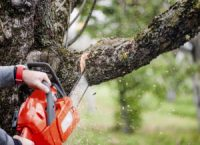 daves-tree-service.jpg