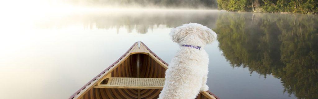 dog-canoe